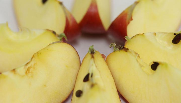 Yet these apple slices are white -- but soon they will lose their 'fresh' color and turn brown by tyrosinases. Credit: Copyright: University of Vienna