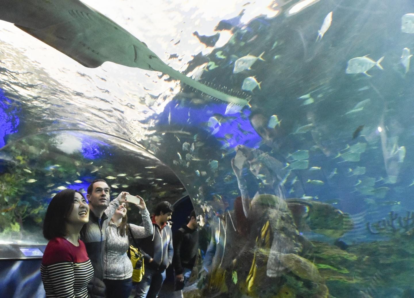 An experiential gift like concert tickets or passes to an aquarium, may help build a stronger relationship than giving a material item. Credit: Ken Jones