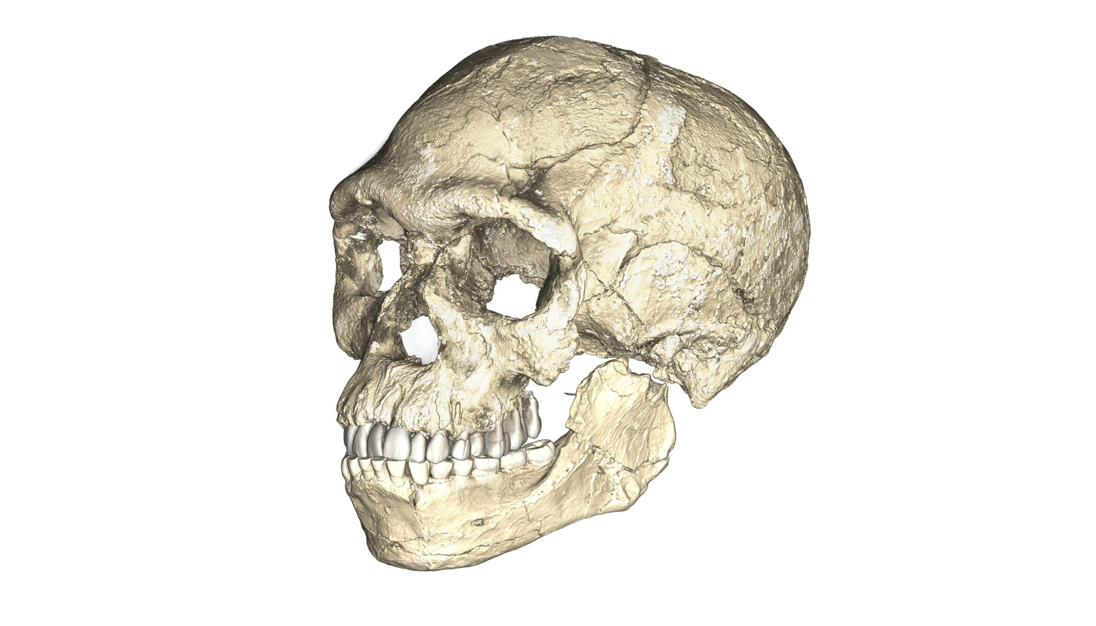 New Homo sapiens fossil bones are the oldest yet