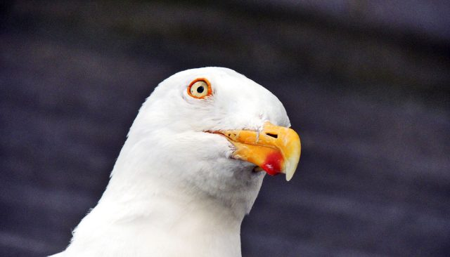 Tons of gull poop mess up nearby water
