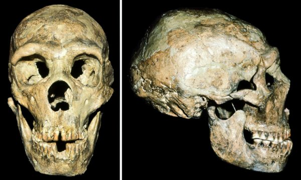 Deaf, injured Neanderthal survived with help from friends