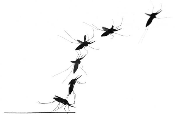 How mosquitoes get away before you can slap them
