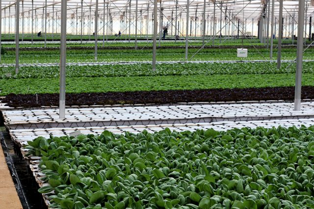 Grocery store program pushed farmers to go green