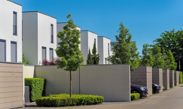 The value of planting mature trees on your property