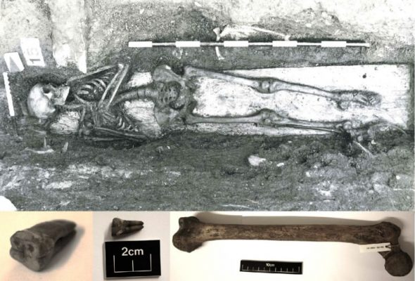 DNA from skeleton puts enteric fever in medieval Europe