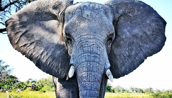 'Zombie' gene returns to life and kills cancer in elephants