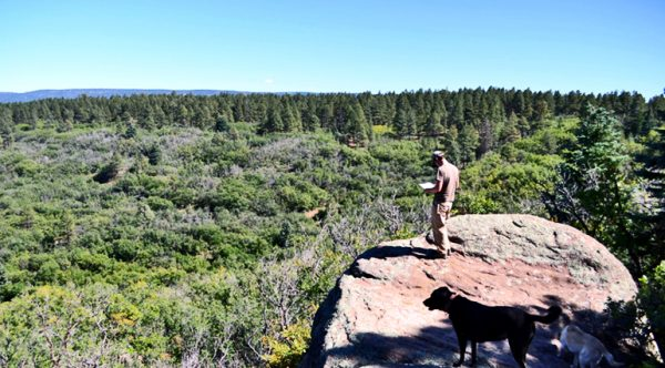 Are we doomed to repeat prehistoric vegetation loss?
